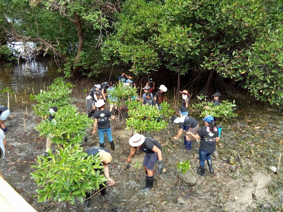 Inside Boracay Week 6 Mangrove Rehabilitation and clean up Boracay Haven Staff Team
