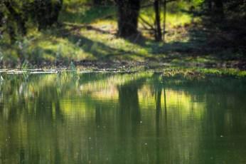 Grön spegling