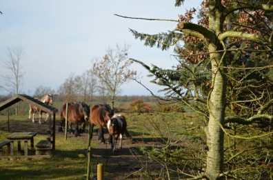 Hestehygge i hegnet