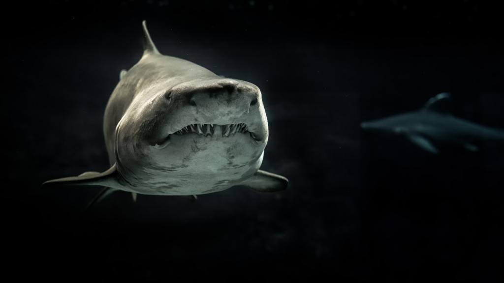 selective-photo-of-gray-shark-726478
