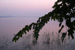 trichonida sunset 01