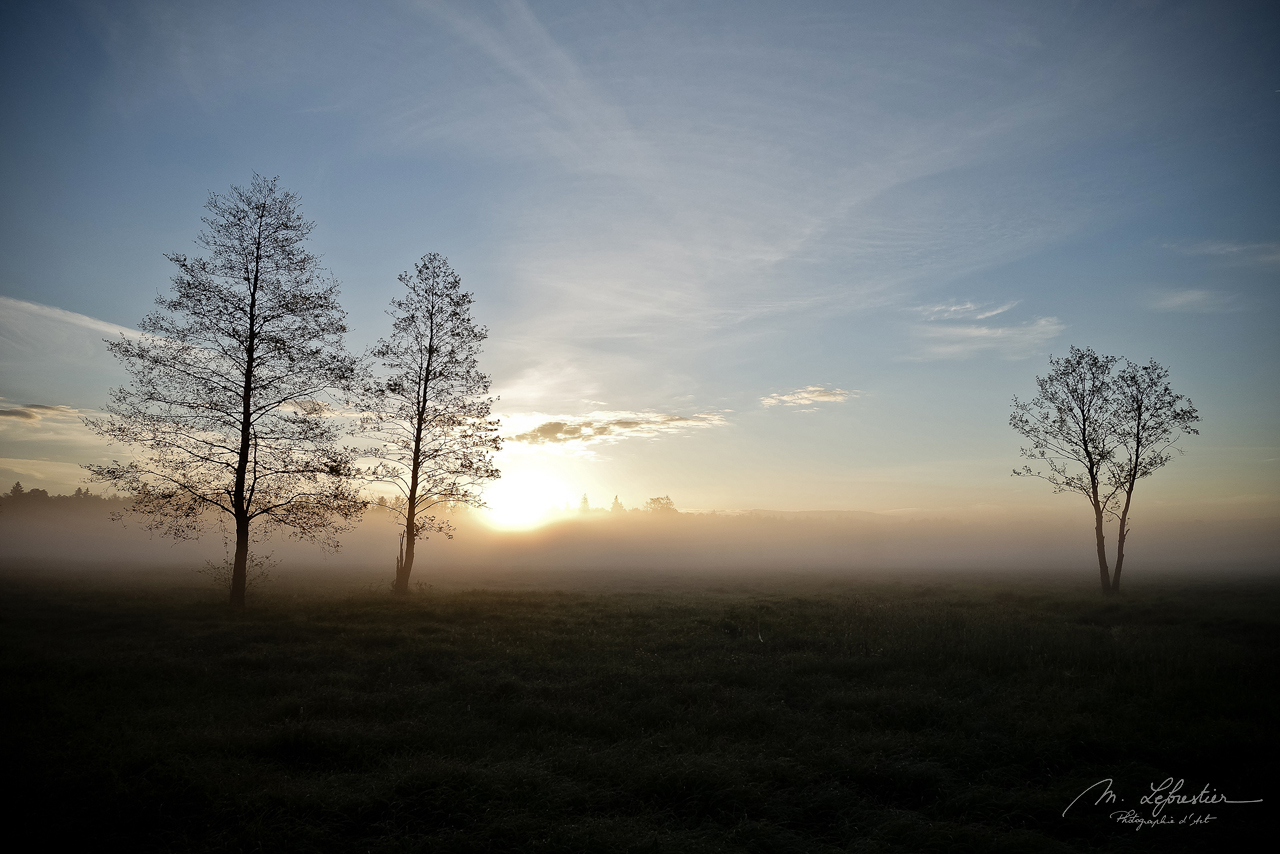 trees in bialowieza forest at sunrise in Poland with mist and meadows