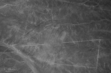 monkey nazca lines peru