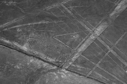 Spider Nazca lines Peru