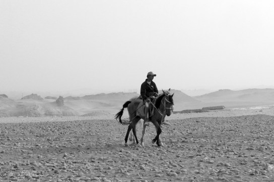 local on a horse at the pyramids of Giza Egypt