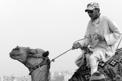 local beouin on a camel in front of the city of Giza