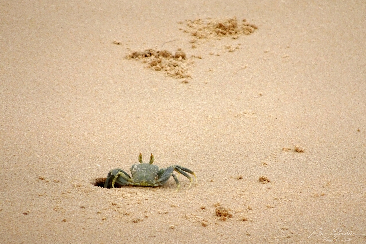a crab is getting out of a hole in the sand on Bazaruto Island in Mozambique