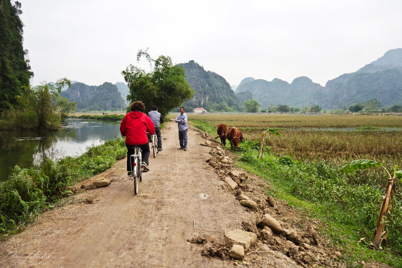 people biking in tam coc vietnam and talking to a local with his cows