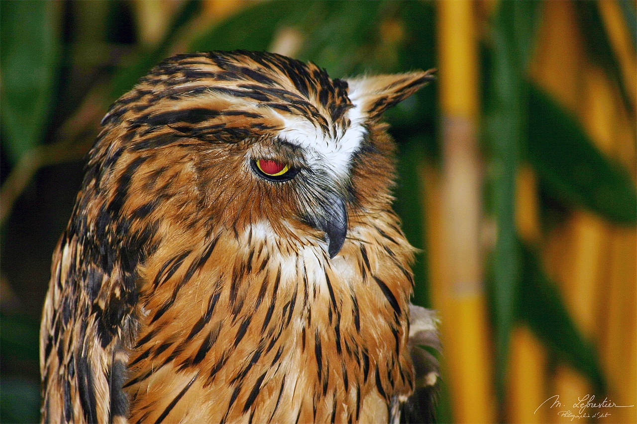 an owl at Langkawi bird paradise wildlife park in Malaysia