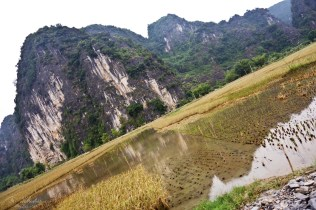 rice fields in Tam Coc Ninh Binh Vietnam