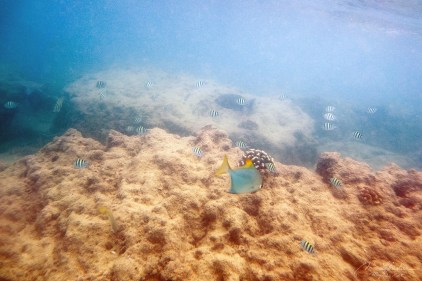 snorkeling in Baruto marine park two mile reef is amazing, beautiful colorful fish