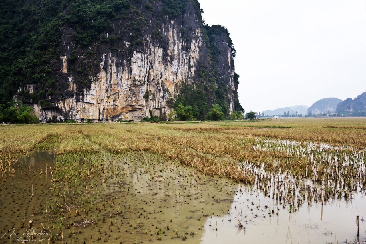 rice fields in Tam Coc seen from the biking route