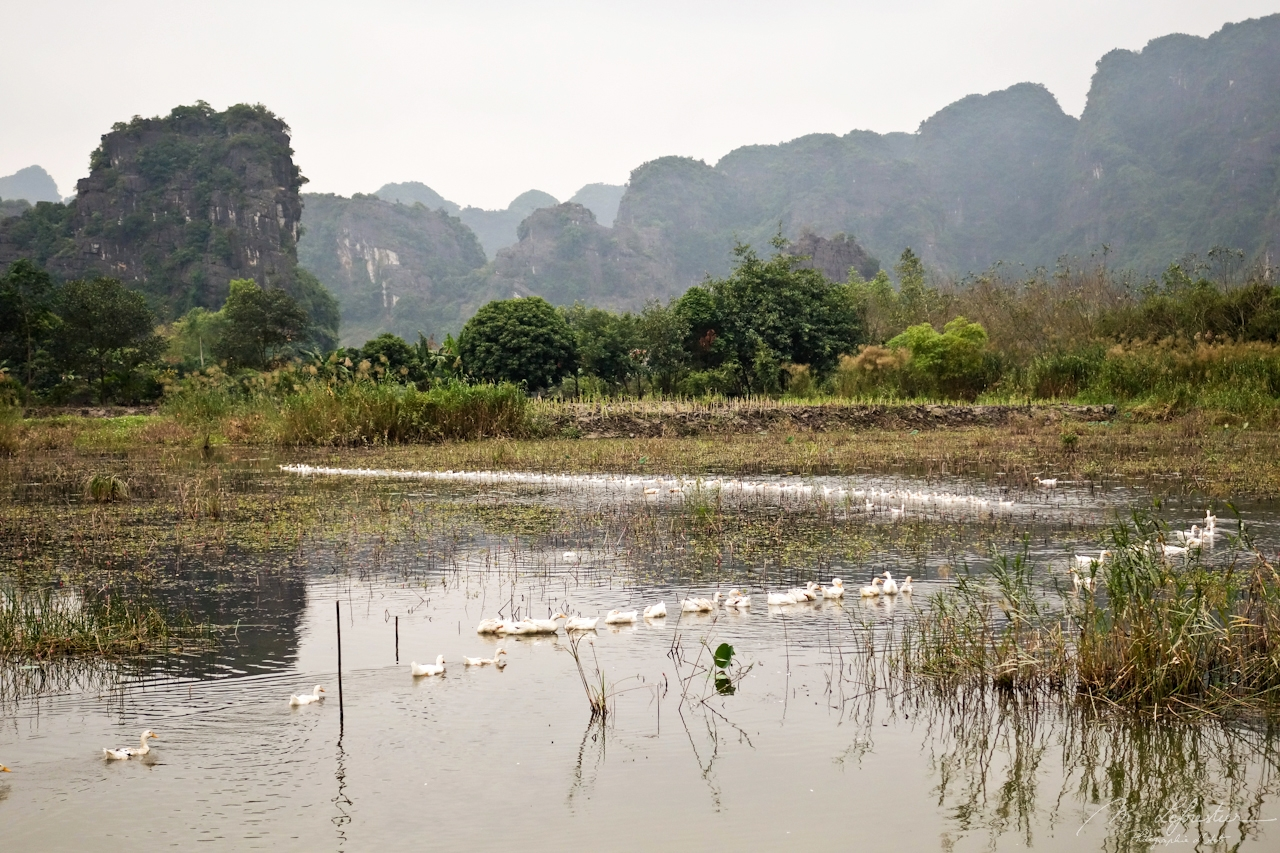 rice fields in Tam Coc Vietnam