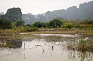 rice fields in Tam Coc Vietnam
