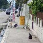 a litter bin in a street in the city of Santiago in the Dominican Republic