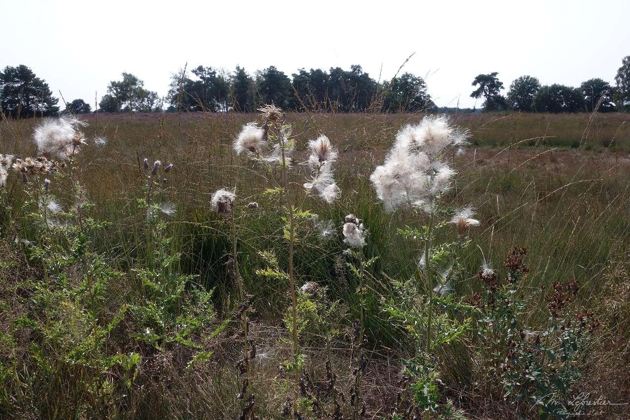 strabrechtse heide nature reserve in september 2020