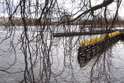 34 yellow penguins by the Cracking Art group bringing a message about climate change on the river Vltava in Prague