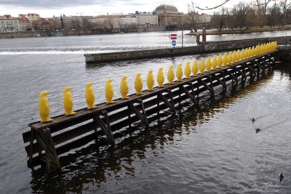 34 yellow penguins bringing an important message about the environment on the river Vltava in Prague