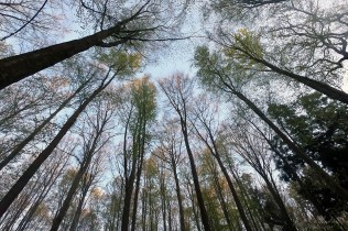 looking up in the sky in the forest of Hallerbos, Belgium