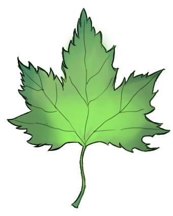 Как нарисовать листок