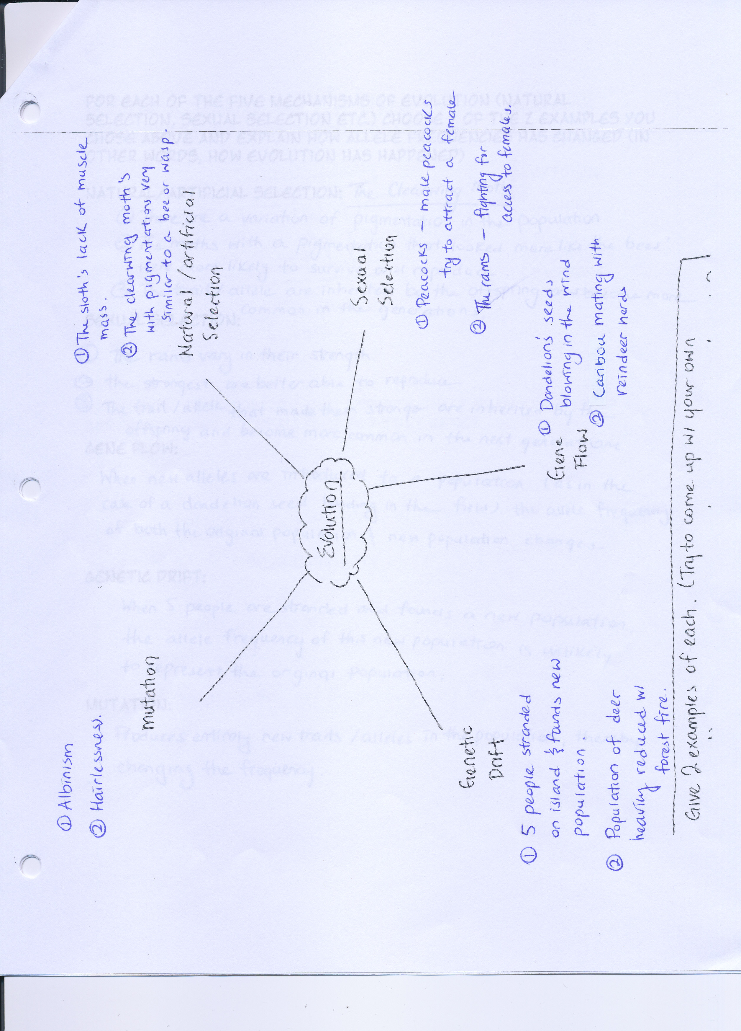 Selection And Speciation Worksheet Answers