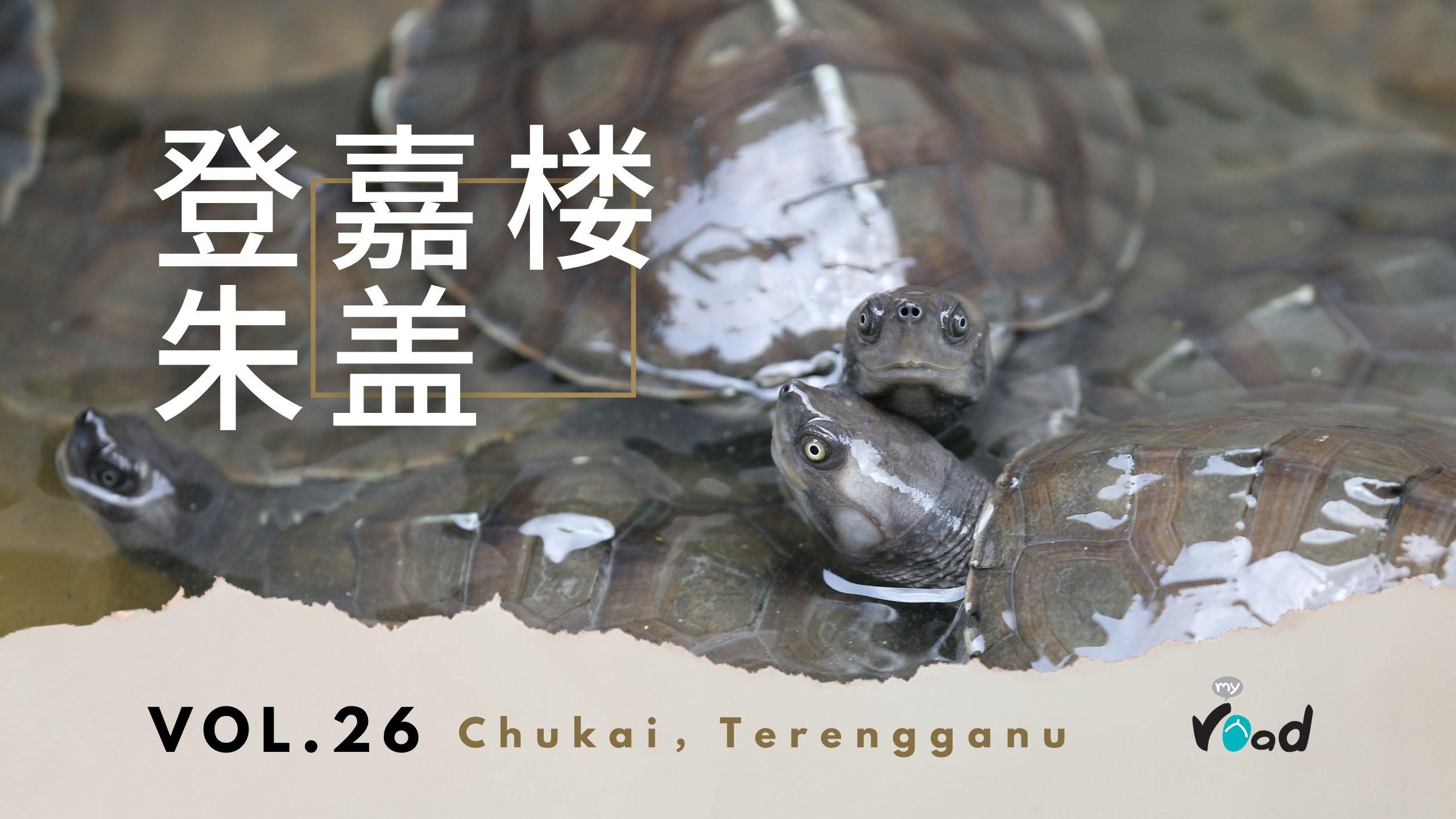 登嘉楼:淡水龟保育  Terengganu – Terrapin Conservation