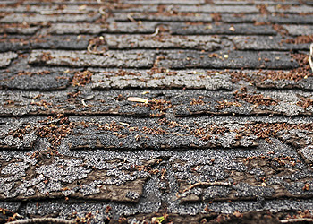 Decay Shingles - Denver Roofer