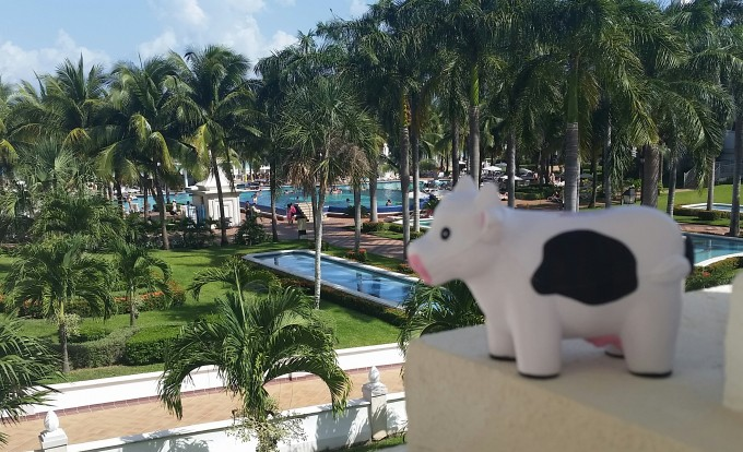 Roof Worx Cow on Vacation