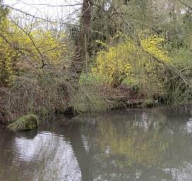 False Creek pond