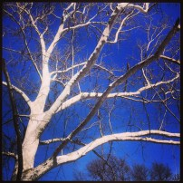 My run view 3.4.14 - Birch in Kansas City, Mo. © Sally Morrow Photography
