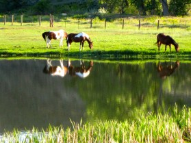 Ucross Ranch horses.