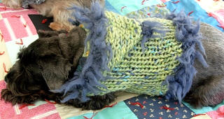 Knitting Leftovers = 'Furrrocious' Dog Sweaters Four Ways (5/6)