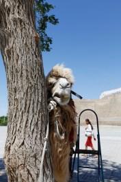 Uzbekistan - Bukhara - Beauty and the Beast