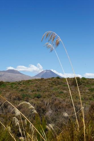 New Zealand - Tongariro Volcano
