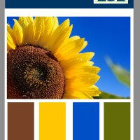 Color Formula 27 Summer Sunflower, a Video Color Palette