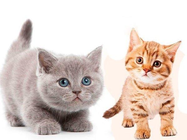 К чему снятся котята - к чему снится маленький котенок