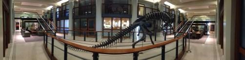 Dinosaur in Guyot Hall
