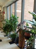 Plants in Guyot