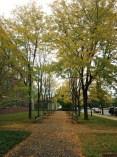 Near Shapiro Walk