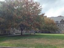 Whitman Courtyard