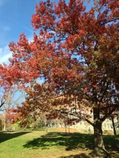 Near Wilson College