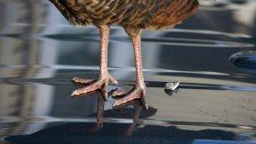 bird-poop-on-car