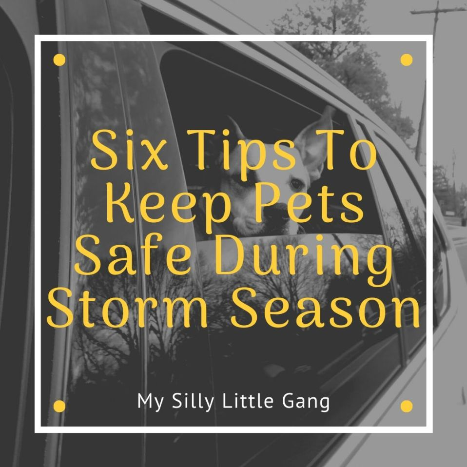 Six Tips To Keep Pets Safe During Storm Season @TurfMutt #MySillyLittleGang