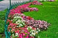 Flowers in Botanical garden Ooty
