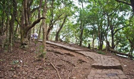 Way to Lamb's rock viewpoint coonoor