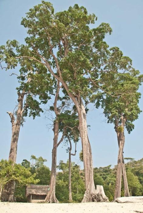 Tree at chidiya tapu
