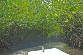 Boats in mangroves