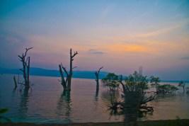 sunset at chidiya tapu with trees