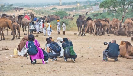 Pushkar camel fair in morning photographers