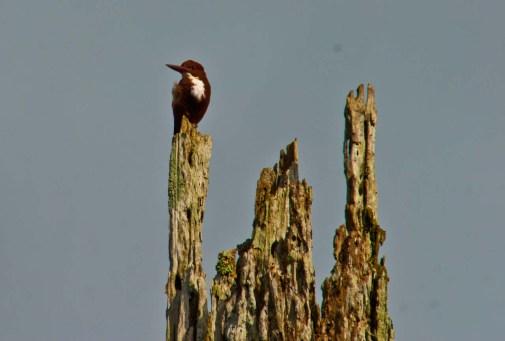 Kingfisher Boating in Periyar lake